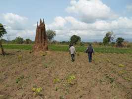 termitière au togo
