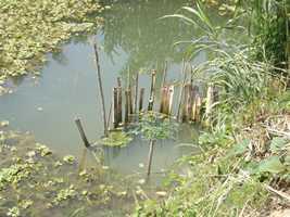 pisciculture 1
